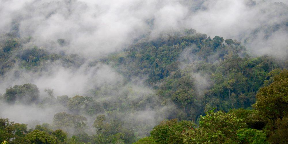 Nyungwe Rainforest