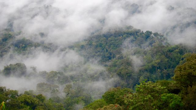 Nyungwe Rainforest